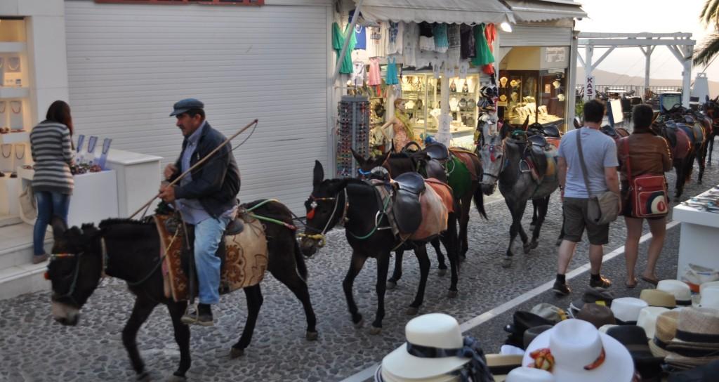 Магаренцата са навсякъде из Санторини. За да не се насърчава малтретирането на животните, по-добре туристите да се въздържат да ги ползват като атракция и да не ги яздят.